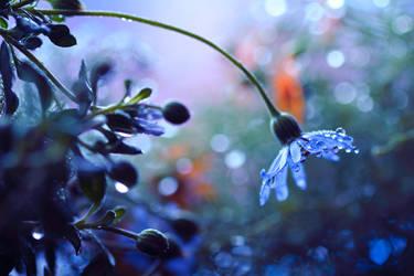 blue daisy by Mars-Hill