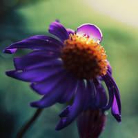 petals by Mars-Hill