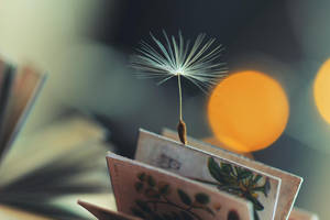 * bookmark by Mars-Hill