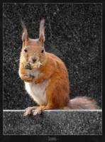 Squirrel by Jo-Hanes