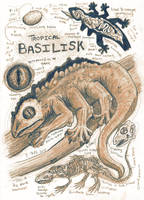 Tropical Basilisk Anatomy Illustration by Kway100