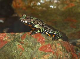 Frog by UnicornReality