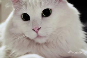 Just Looking at Him by ibjennyjenny