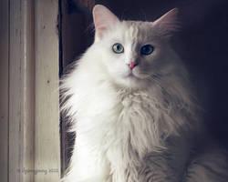 I want to go outside by ibjennyjenny