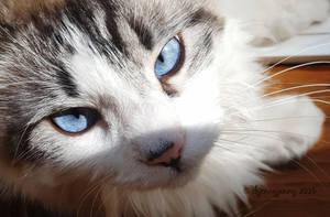 Those Eyes Though... by ibjennyjenny