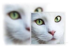 His eyes tell me things by ibjennyjenny