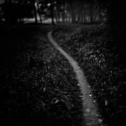 The path by WiciaQ