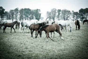 horses. by kuro-no-neko