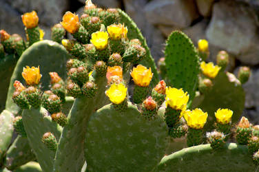 The Birth of Prickly Pears by xanadian