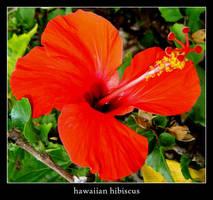 hawaiian hibiscus by xanadian