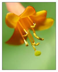flower 5 by xanadian