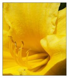 flower 7 by xanadian