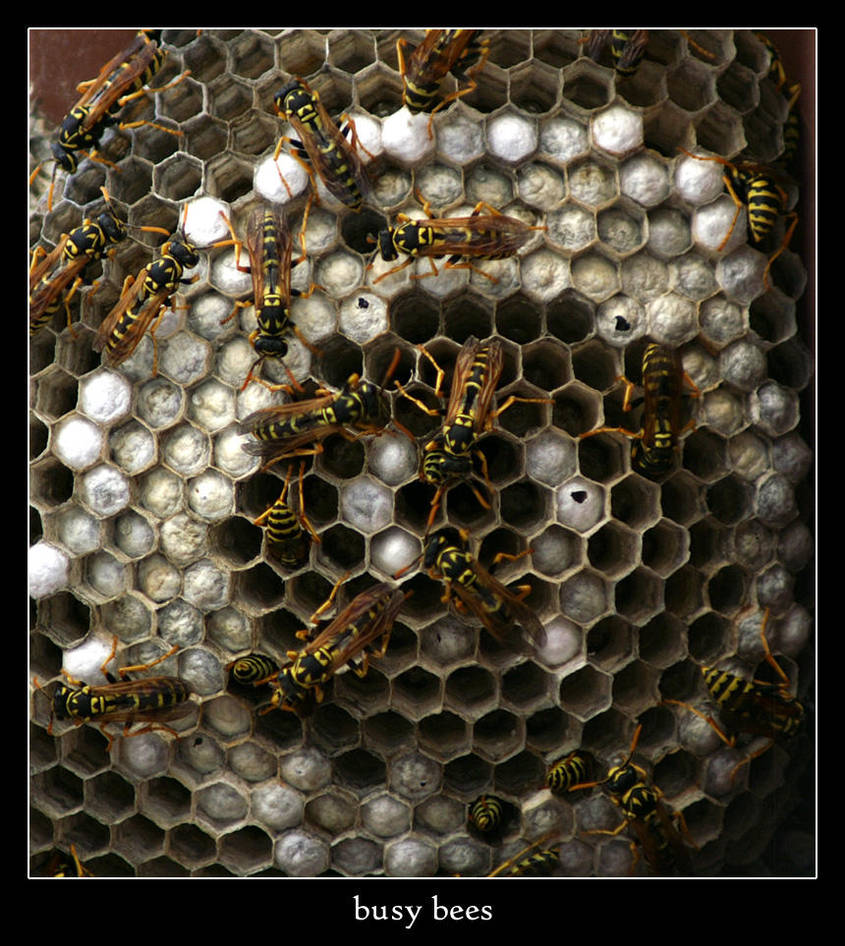 busy bees by xanadian