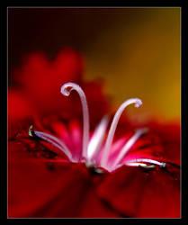 flower 11 by xanadian