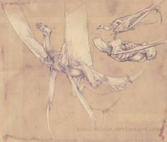 Dragon design by Kuroi-kisin