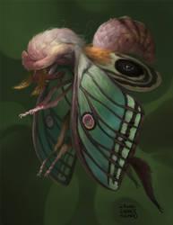 Moth boy by Kuroi-kisin