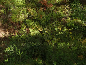 Oergon Woodland by D4tBui