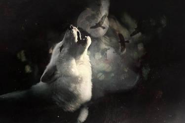 Howl wolf, Howl by xmhessa