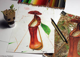 Pitcher plant WIP by Quelchii