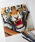 Tiger WIP by Quelchii