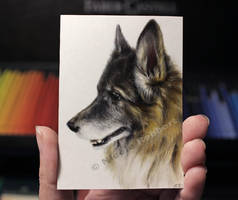 Dog sketch card (Commission) by Quelchii