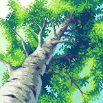 A Birch by gas13