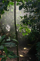 STOCK PHOTO jungle mist3 by MaureenOlder