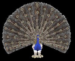STOCK PNG peacock4 by MaureenOlder