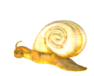 STOCK PNG snail3 by MaureenOlder