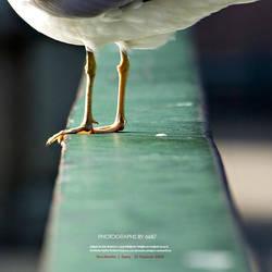 Gull by OnurY