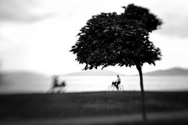 flyum by OnurY