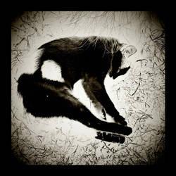 Sleep by OnurY