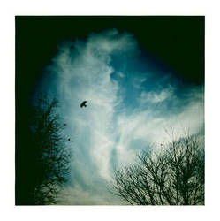 Strange Little Bird by OnurY