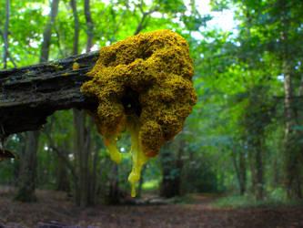 Physarum polycephalum by Oniroid