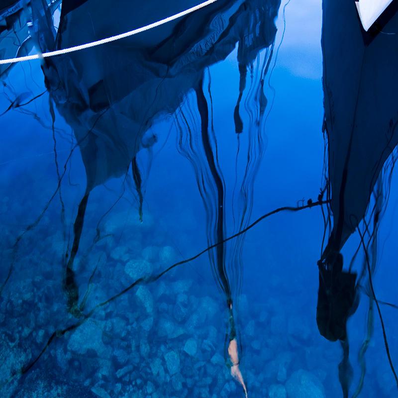 blue dream 1 by poivre