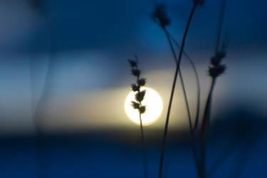 creative sunset original by poivre