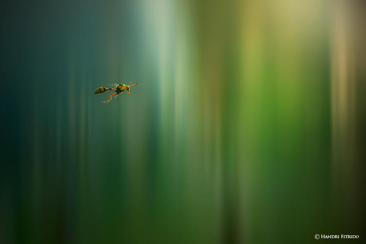 Spectrum by fitrido