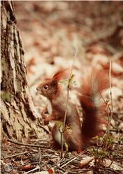 Squirrel Klein-Auheim by RemusSirion