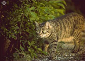 Summer Katzi II by RemusSirion