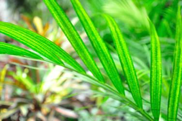 Plants by r00tsharp