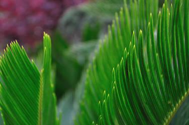 Plants 5 by r00tsharp