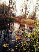 Swamp in Serbia by alxmm1