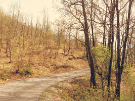 Forest road by alxmm1