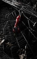 Weird spider by reinohvp