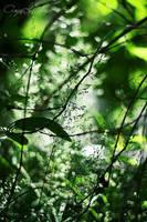 jungle by meldir