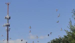 Flight of the Cranes by LaMoonstar
