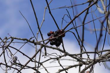 Fruit in Winter by LaMoonstar