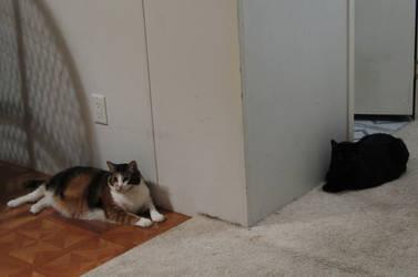 Catty Corner Cats by LaMoonstar