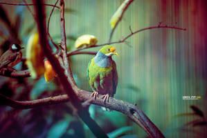 bird by PYFF