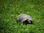 Tortoise by FirstLightStudios